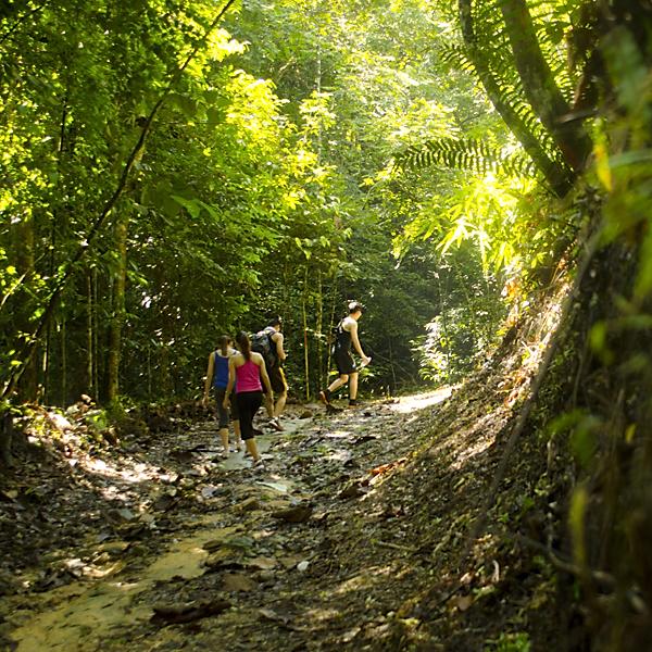 Jungle Trekking-100